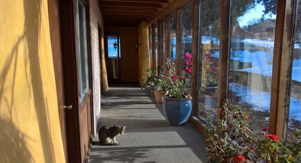 Minou, the monastery cat